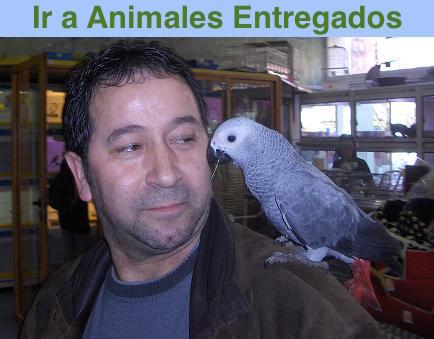 Animales Entregados