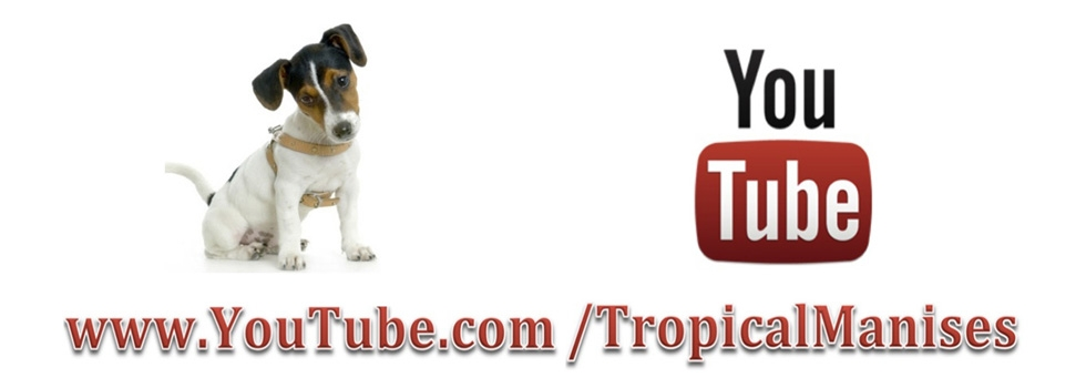 Tropical Manises en youtube